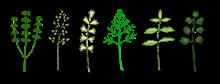 bylinky pxb