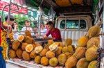 durian predaj pxb