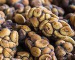 káva kopi luwak 2